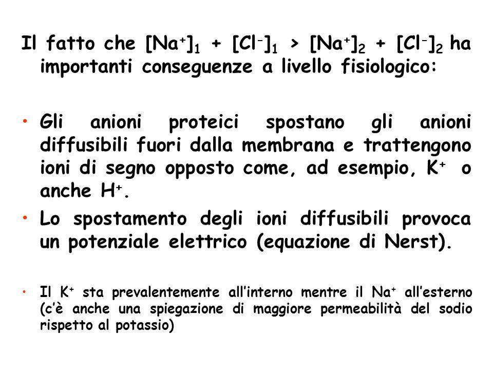 Il fatto che [Na+]1 + [Cl-]1 > [Na+]2 + [Cl-]2 ha importanti conseguenze a livello fisiologico:
